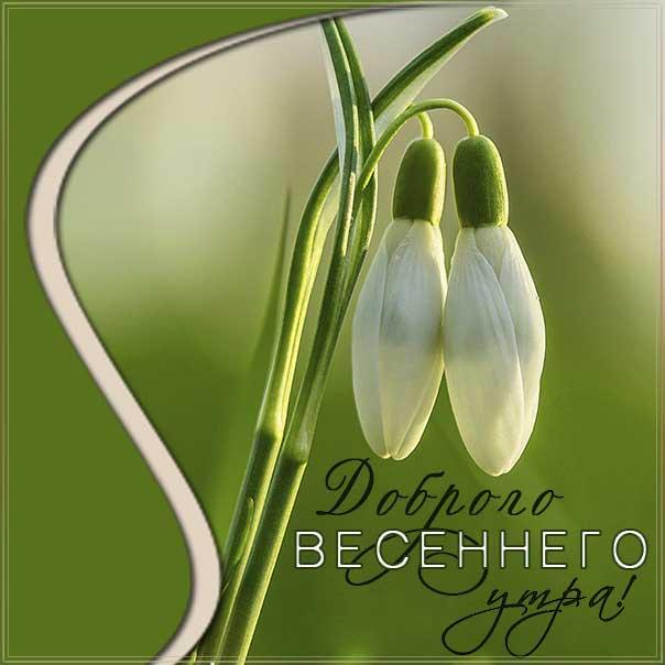 доброго весеннего утра, весеннее утро, картинка утро подснежники, подснежники весна, картинка с надписью чудесное утро, отличного настроения, позитивного утра, хорошего утра