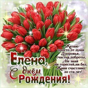 с днем рождения Елена тюльпаны