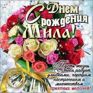 Мила с Днем рождения поздравительная открытка. Розы, красивый букет, слова, стих, поздравляю, эффекты, мигающая, узоры.